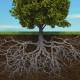 racines-echopsy